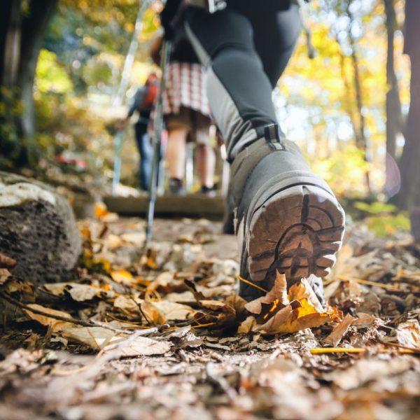 Marche en groupe en forêt